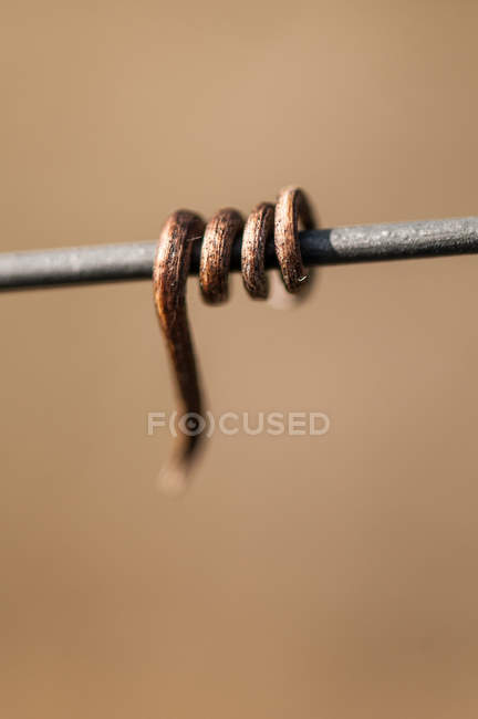 Close-up of a vine round a cable, Bordeaux, France — Stock Photo