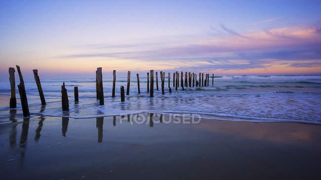 Деревянные столбы на St Clair Beach, Данидин, Новая Зеландия — стоковое фото