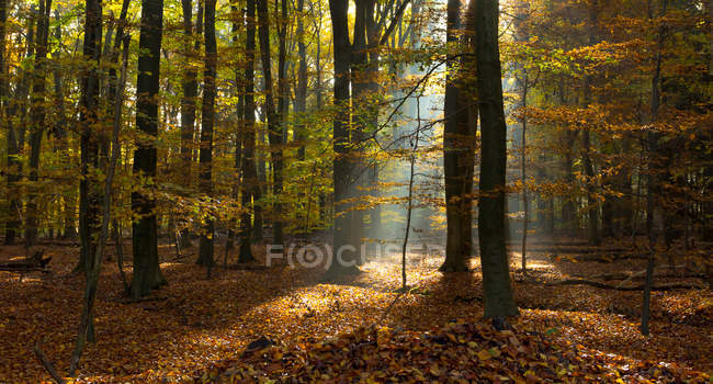 Majestic view of beautiful forest with scenic sunlight — Stock Photo