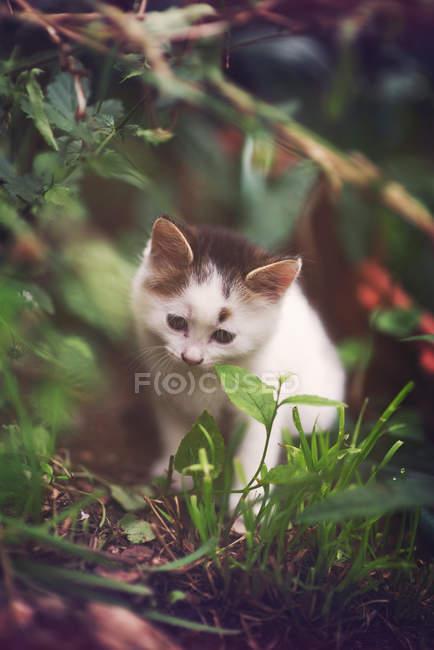 Милий пухнастий кошеня ходьба в саду — стокове фото