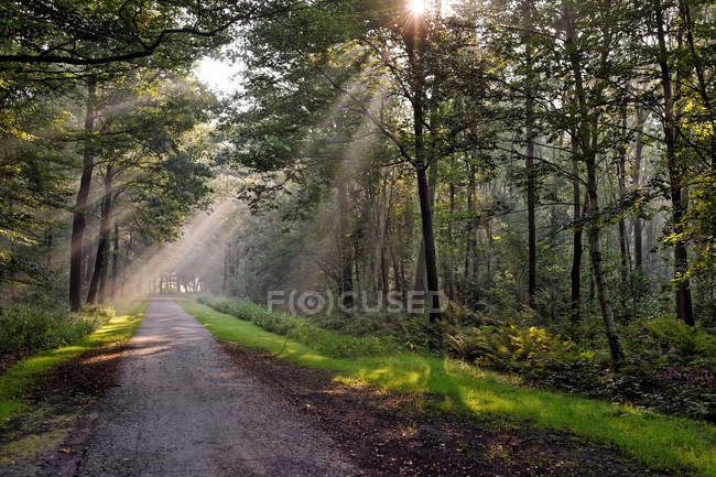 Scenic view of rays of light in forest, Germany, Lower Saxony, East Frisia — Stock Photo