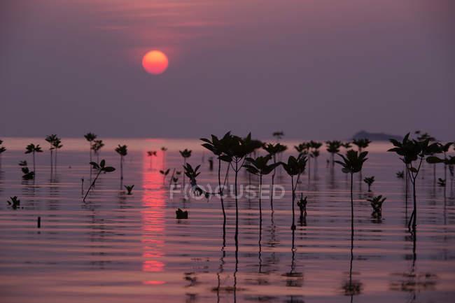 Vue panoramique sur les mangroves au coucher du soleil, Thaïlande — Photo de stock