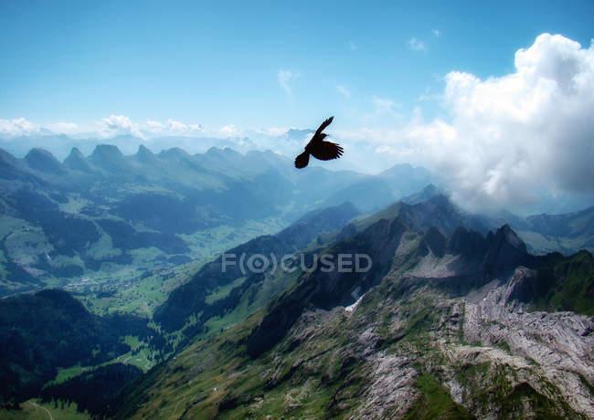 Greifvogel fliegt über santis mountain, schwende, Schweiz — Stockfoto