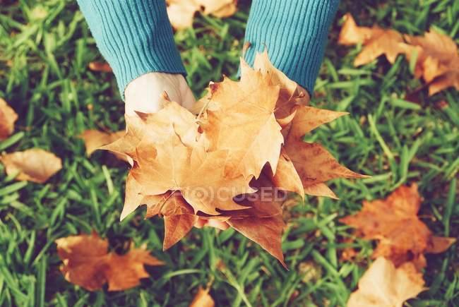Imagen recortada de las manos sosteniendo hojas de otoño sobre hierba verde - foto de stock