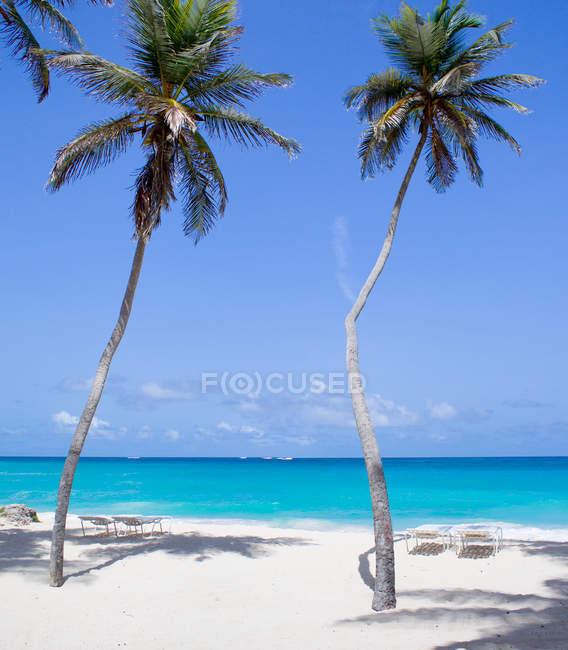 Vista panorâmica de palmeiras na praia, Barbados — Fotografia de Stock