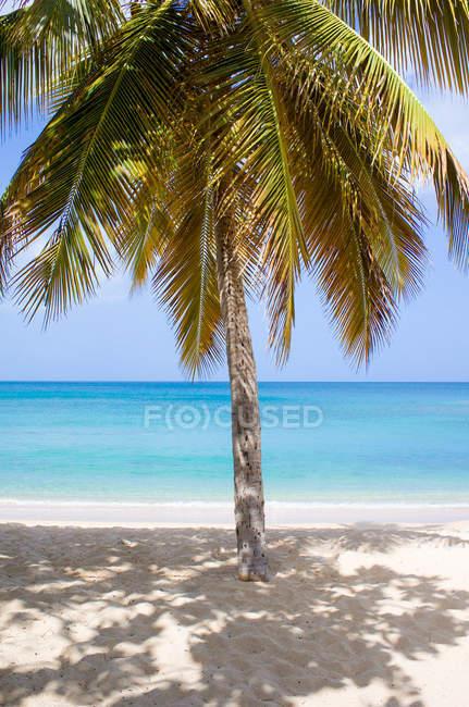 Scenic view of Caribbean sea, Antigua, Palm tree on sandy beach — Stock Photo
