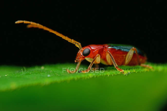 Close-up of an insect on a leaf against blurred background — Stock Photo