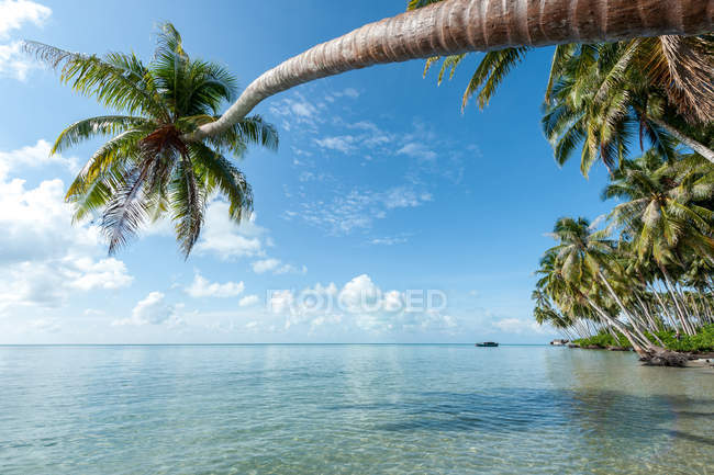 Scenic view of palm tree on beach overhanging ocean, Semporna, Sabah, Malaysia — Stock Photo