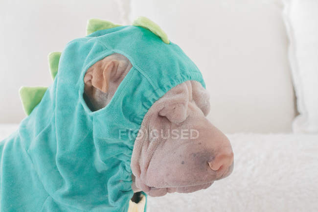 Portrait de Shar-Pei chinois triste blanc chien déguisé en dragon vert, vue latérale — Photo de stock
