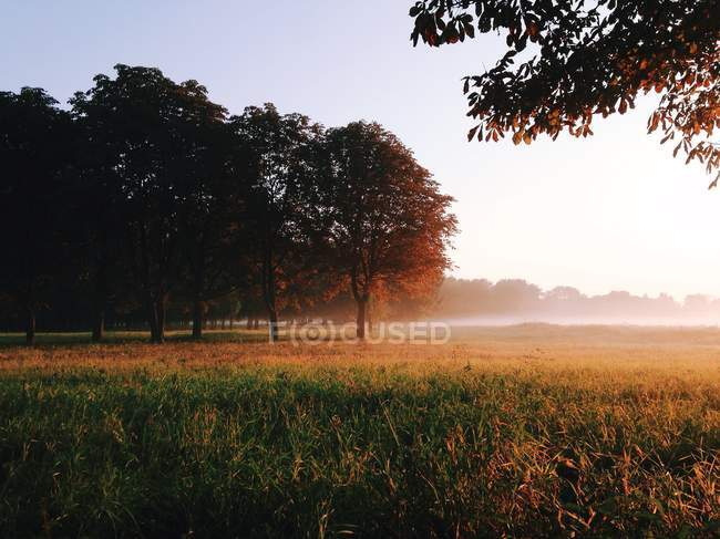 Scenic view of rural landscape and morning mist — Stock Photo