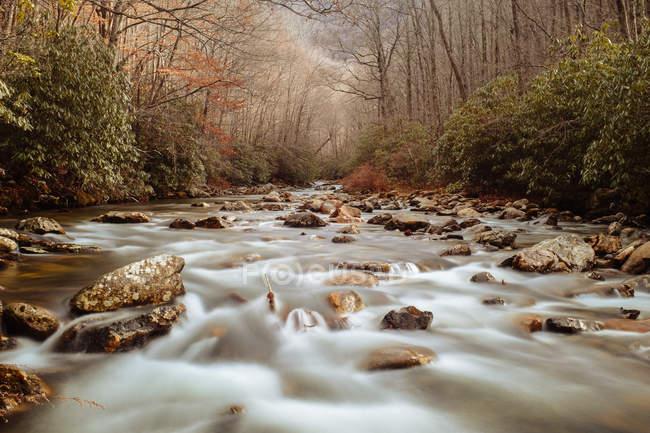 Живописный вид на горный ручей, Северная Каролина, США — стоковое фото