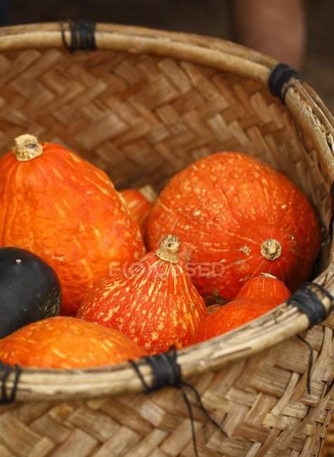 Close-up of fresh orange Pumpkins in basket — Stock Photo
