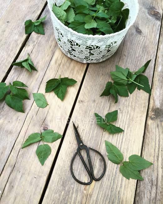 Зелёные листья и ножницы на деревянном столе или эгоподиуме — стоковое фото