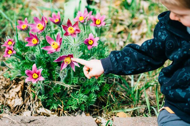 Мальчик, указывая на цветущие цветы на открытом воздухе — стоковое фото