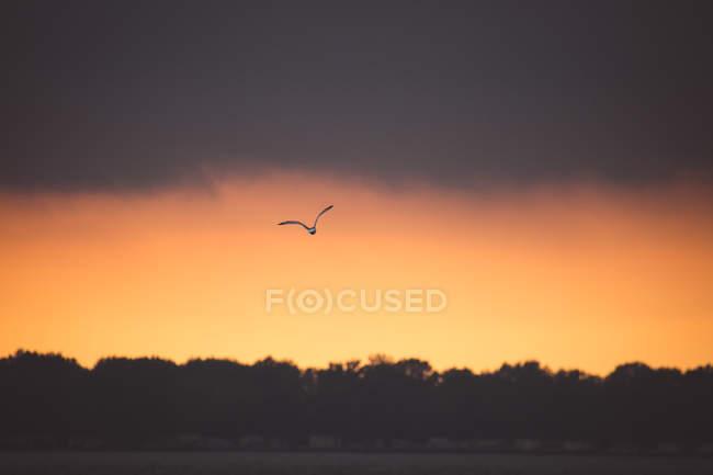 Птах летить над озера ері на захід сонця, штат Огайо, США — стокове фото