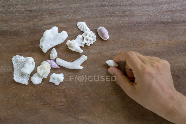 Cropped image of Man picking up shells from wooden table — Stock Photo