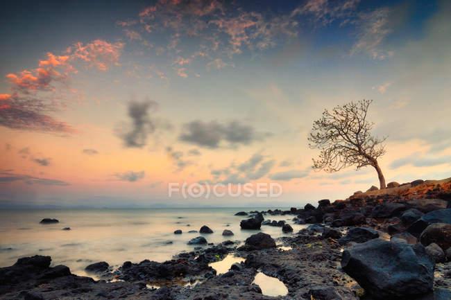 Vue panoramique sur l'arbre sur la côte rocheuse, West Nusa Tenggara, Indonésie — Photo de stock