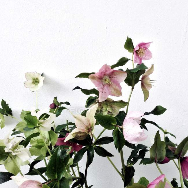 Fresh Flowers growing against white wall — Stock Photo