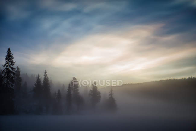Scenic view of forest in morning mist — Stock Photo
