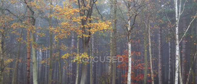 Autumn Season in Westbriggs Woods, UK, England, Norfolk — Stock Photo