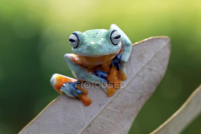Atarracado rela sentado na folha contra fundo verde turva, conceito de imagem engraçada — Fotografia de Stock