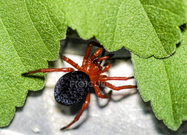 Closeup view of dangerous spider and leaves — Stock Photo