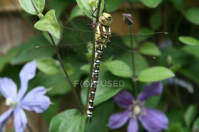 Primer plano de libélula sentada sobre planta contra flores sobre fondo - foto de stock