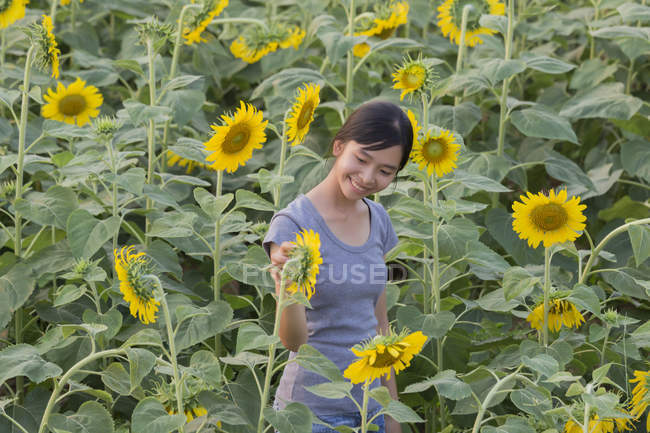 Smiling Teenage girl looking at sunflowers in field — Stock Photo