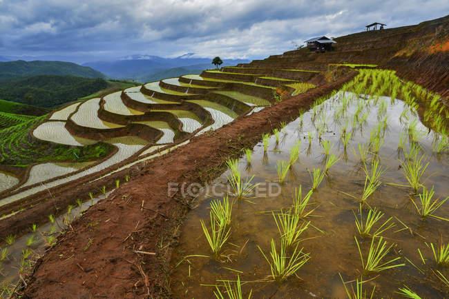 Scenic view of rice terraces, , Mu Cang Chai, Vietnam — Stock Photo