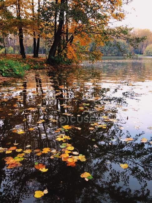Живописный вид осенней листвы в озере — стоковое фото
