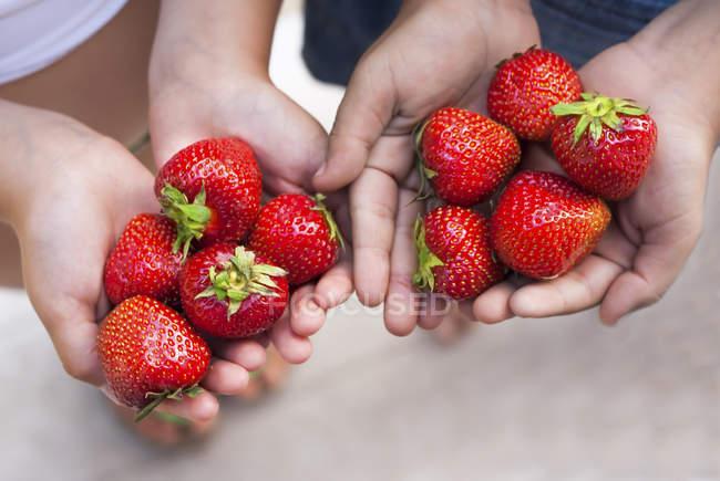 Руки детей, проведение свежей клубники — стоковое фото