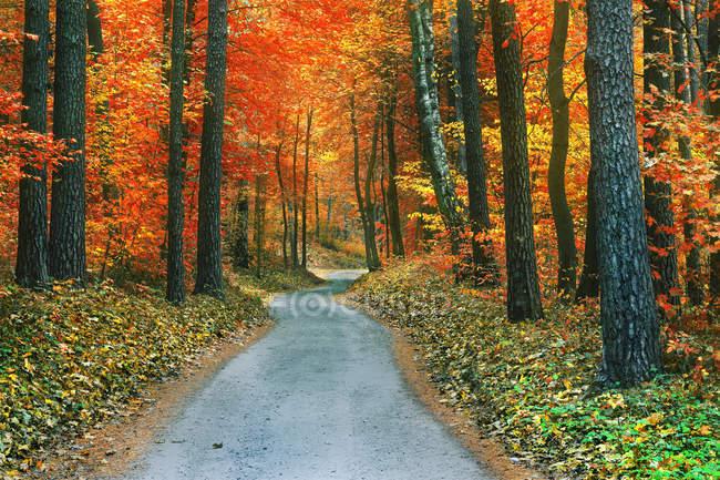 Malerischer Blick auf Herbstbäume im Nationalpark, Litauen — Stockfoto