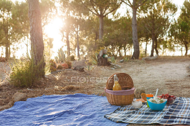Picnic basket with food and drink on picnic blanket in garden — Stock Photo