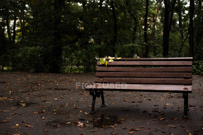Empty bench in park on rainy day — Stock Photo