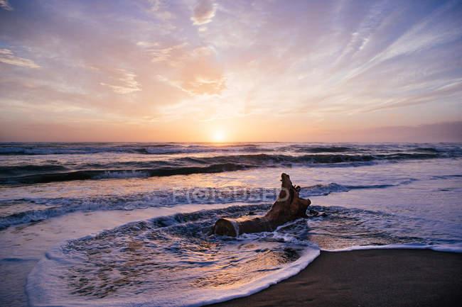 Treibholz am Strand bei Sonnenuntergang, Pescia Romana, Latium, Italien — Stockfoto
