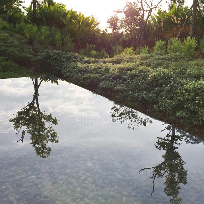 Wald mit Bäumen, die im Wasser reflektiert — Stockfoto
