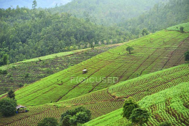 Malerische Aussicht auf Reis Terrasse im Norden Thailands — Stockfoto