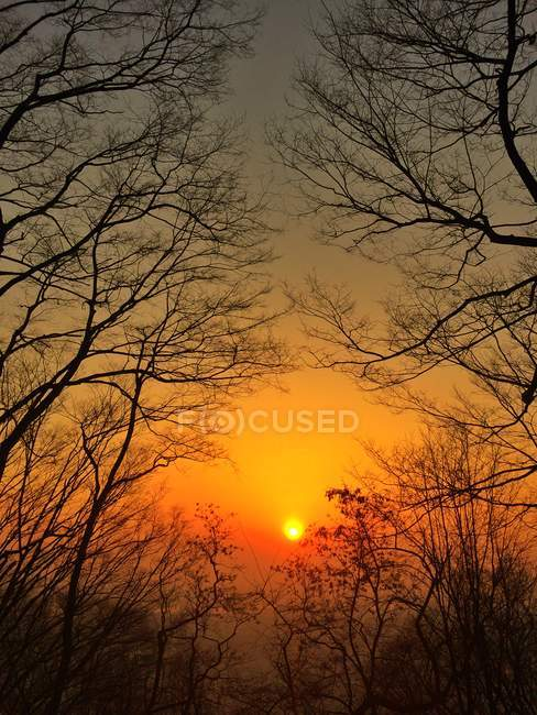 Scenic view of branches of bare trees at sunset — Stock Photo