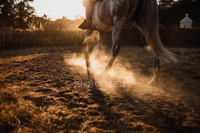 Equitation à lumineux beau coucher de soleil — Photo de stock