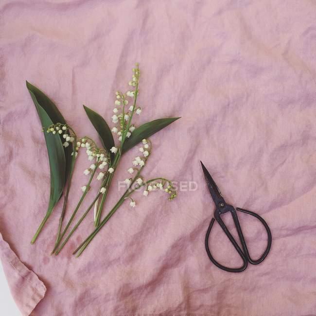 Flores de lírio do vale e tesoura no fundo de linho rosa — Fotografia de Stock