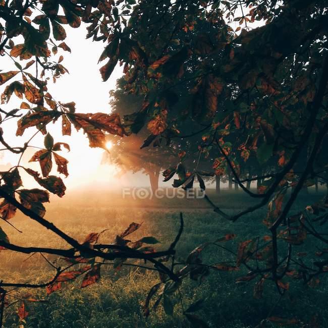 Vista panoramica della luce solare mattutina nella foresta — Foto stock