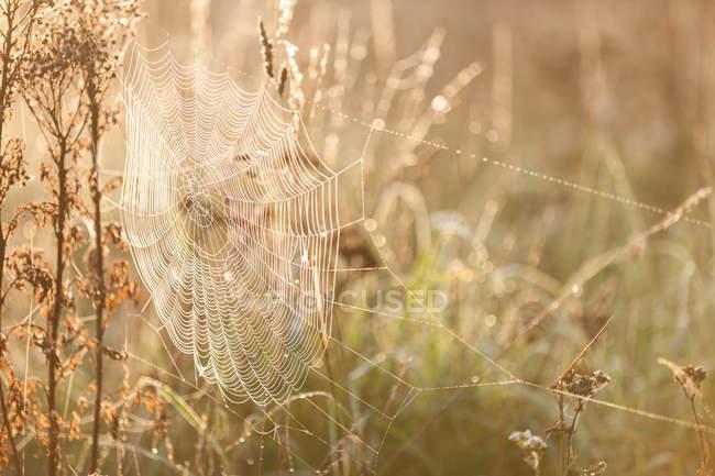 Живописный вид на булыжник, покрытый утренней росой — стоковое фото