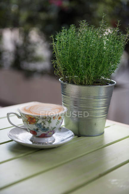 Cappuccio in floral teacup next to thyme plant — Stock Photo