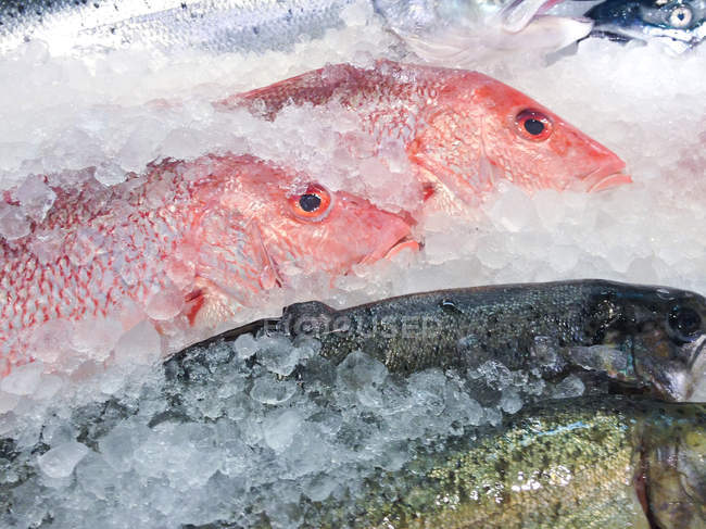 Fresh fishes at fish market, closeup view — Stock Photo