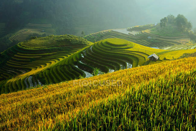Rice terrace during sunset, Northeast region of Vietnam — Stock Photo