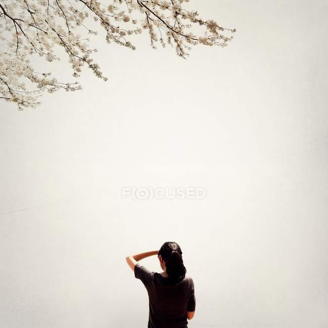 Вид сзади на девушку, смотрящую на цветущее дерево — стоковое фото