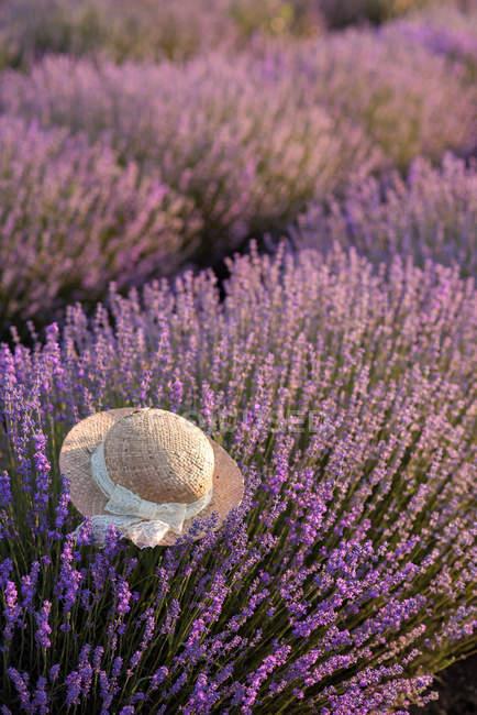 Соломенная шляпа, лежащие в поле лаванды — стоковое фото