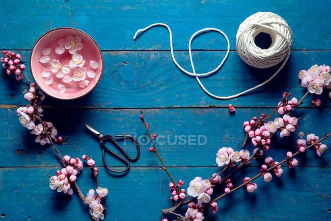 Розовый сакуры, ножницы и строки — стоковое фото