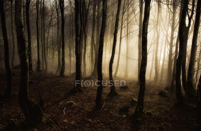 Vista panorámica de la niebla por la mañana en el bosque de Navarra, España - foto de stock