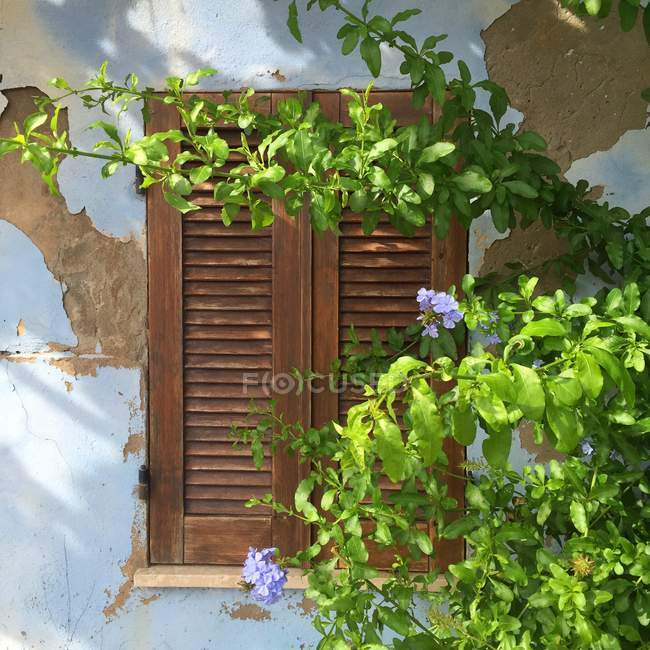 Close-up of shutters on window with plant and flowers — Stock Photo